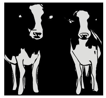 sarah-verroen-koeien