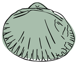 sarah-verroen-kokkel