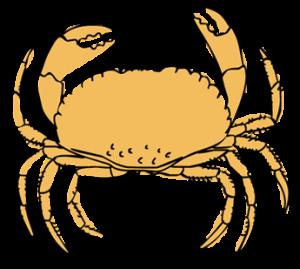 sarah-verroen-krab