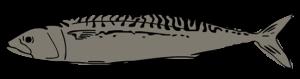 sarah-verroen-makreel
