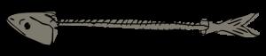 sarah-verroen-makreel-graat